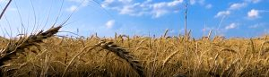 PW365 Volunteer sign up-wheat-footer